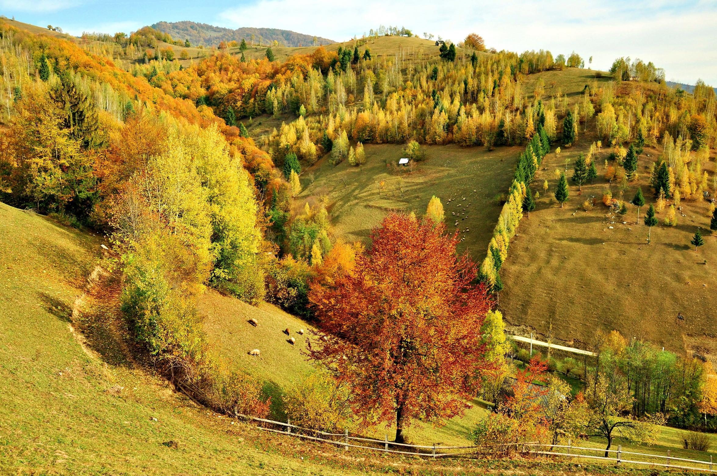 Фото природа россия осень 2
